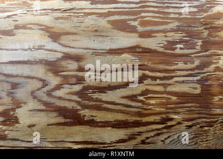 Close-up of  wood grain designs in a wooden utility pole - Stock Image