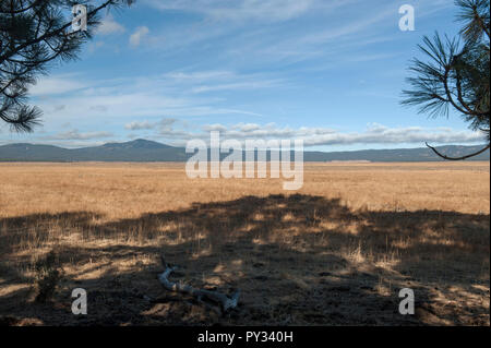Big Summit Prairie, a very large (over 20 square miles) meadow in Oregon's Ochoco Mountains - Stock Image