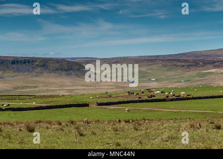 North Pennines Landscape, Cronkley Scar, Widdybank Fell & Pasture, Teesdale, UK from Wool Pits Hill in spring sunshine - Stock Image