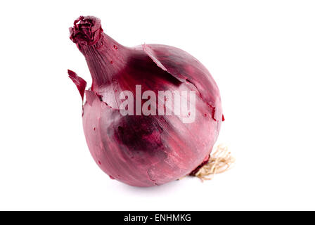 Single unpeeled red onion close up. - Stock Image