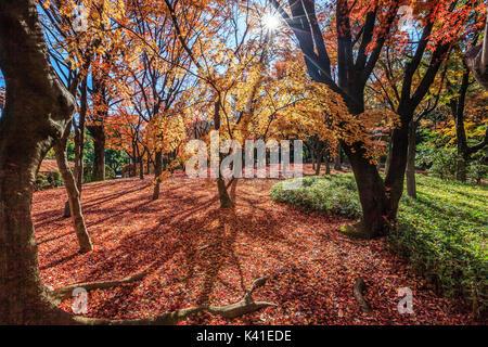 Autumn at Kitanomaru Park in Tokyo,Japan - Stock Image
