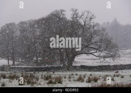 Cumbria, UK. 18th Jan, 2019. UK weather. Heavy snow falls in the Langdale Valley. It is expected to remain cold for the next few days. Credit: Mark Hunter/Alamy Live News - Stock Image