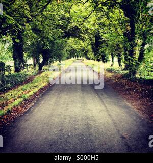 A country lane, Oxfordshire, England, UK - Stock Image