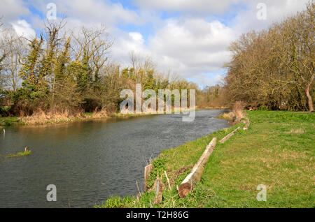 A view of the River Bure upstream of Horstead Mill from Coltishall, Norfolk, England, United Kingdom, Europe. - Stock Image