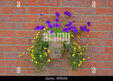A colourful wall hanging container with yellow, purple flowers on a red brick bckground - Stock Image