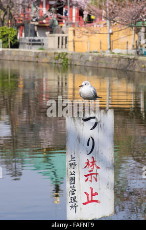 Seagull sitting on a 'No Fishing' sign on Shinobazu Pond, Ueno Park, Tokyo - Stock Image