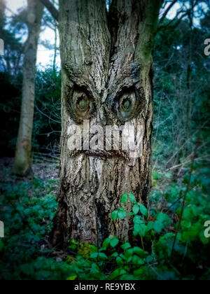 Ancient forest tree Monster - Stock Image
