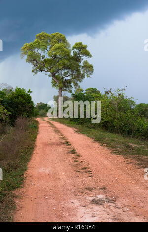 A dirt road in North Pantanal with an approaching storm - Stock Image