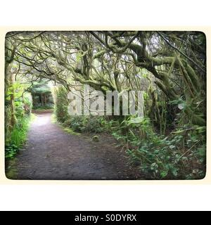 West coast forest trail - Stock Image