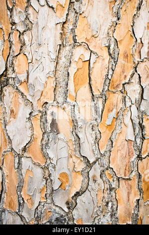 Part of an aged tree trunk as a background image - Stock Image