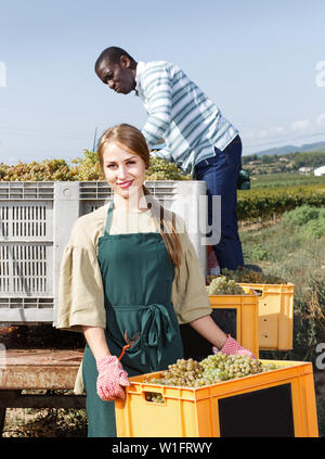 Positive woman and man vineyard workers sorting new grapes harvest in boxes outdoor - Stock Image