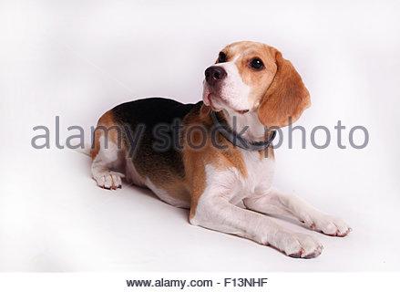My best friend - Stock Image