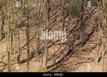 Leaveless trees in the sun casting shadows - Stock Image
