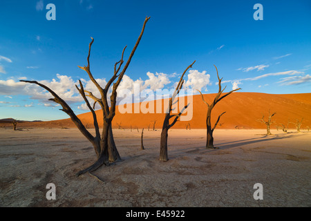 Dead acacia trees in Dead Vlei.Sossusvlei, Namibia - Stock Image