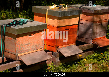 some wooden beehive in the spring sun, nature wooden beehive and flying bees - Stock Image
