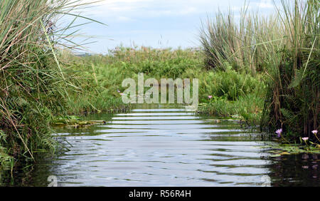 A channel through the Mabamba Swamp on the edge of Lake Victoria. The channel runs through thick vegetation including papyrus (Cyperus papyrus), ferns - Stock Image