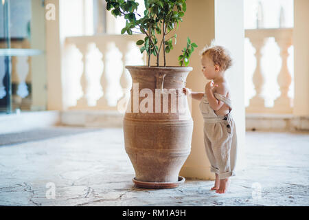 A side view of small toddler girl standing on tiptoes on summer holiday by a flower pot. - Stock Image