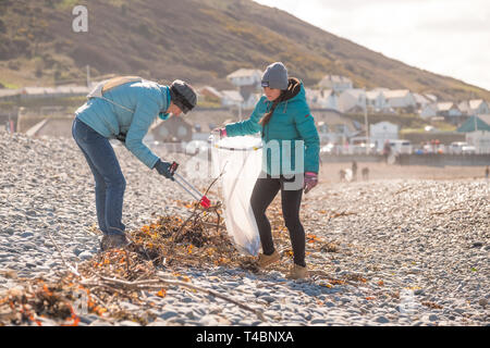 People voluntarily taking part in a beach and river clean , picking up plastic  and other types of rubbish, organised by Aberystwyth Beach Buddies / Gwerin y Glannau on Aberystwyth south beach, Wales UK - Stock Image