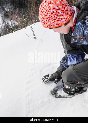 Girl touching the animal tracks on snow in Black Forest, Germany, Europe - Stock Image