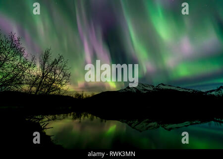 Northern Lights over Moose Lake, Tongass National Forest; Alaska, United States of America - Stock Image