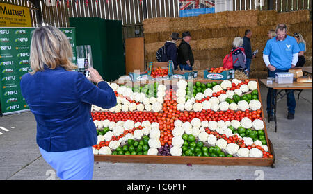 Ardingly Sussex UK 6th June 2019 - The vegetable display on the NFU stand on the first day of the South of England Show held at the Ardingly Showground in Sussex. The annual agricultural show highlights the best in British farming and produce and attracts thousands of visitors over three days . Credit : Simon Dack / Alamy Live News - Stock Image