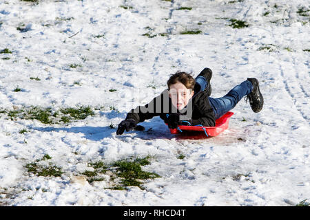 Chippenham, Wiltshire, UK. 2nd February, 2019. A boy enjoying the snow before it thaws is pictured in a local park in Chippenham as he slides down a hill on a sledge. Credit: Lynchpics/Alamy Live News - Stock Image
