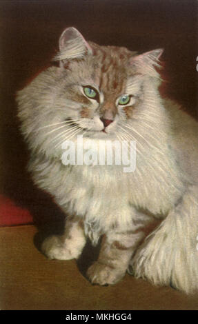 Fluffy Tabby Cat - Stock Image