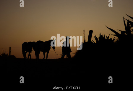 A man leads his horses at sunset along a dirt road at sunset in Mineral de Pozos, an abandoned mine, San Luis de - Stock Image