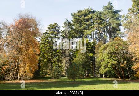 Autumn landscape trees National arboretum, Westonbirt arboretum, Gloucestershire, England, UK - Stock Image