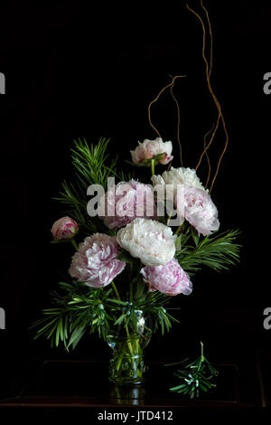 Peonies in a soft still life portrait, flowers in full blossom in soft natural ambient light with a dark/black background - Stock Image