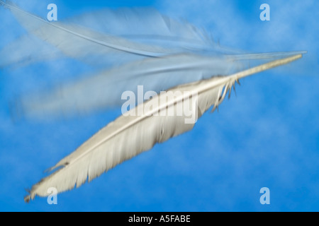 Light as a Feather - Stock Image