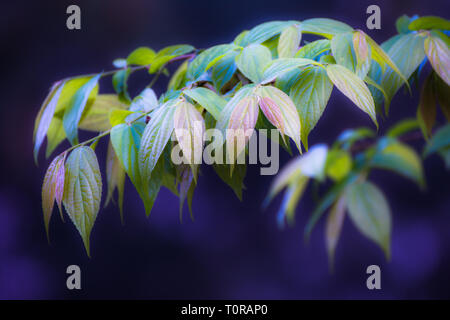 Green leaves pattern background, Natural background and wallpaper - Stock Image