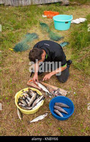 Gutting fish, Northern Sweden. - Stock Image