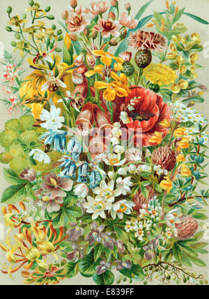Lithograph lithographic litho print of English wild flowers circa 1885 - Stock Image
