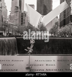 Single Rose, the 9/11 Memorial, NYC, with the Occulus Building in the Background - Stock Image