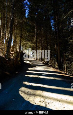 Tree shadows - Stock Image