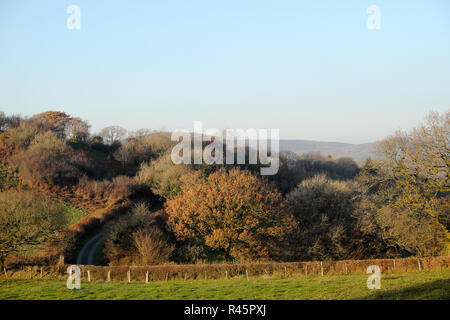 View of colourful autumn landscape with trees and rural country road in November sunshine near Llandovery Carmarthenshire West Wales UK  KATHY DEWITT - Stock Image