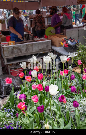 CHARLOTTE, NC, USA-3/16/19: Freshly planted tulips behind  food vendors working at a  stand at a holiday festival. - Stock Image