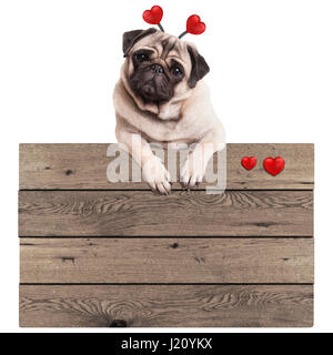 cute pug puppy dog hanging with paws on blank wooden vintage promotional sign with red hearts, isolated on white - Stock Image