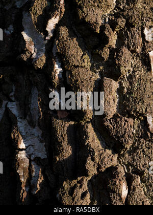 Texture - tree bark - Stock Image