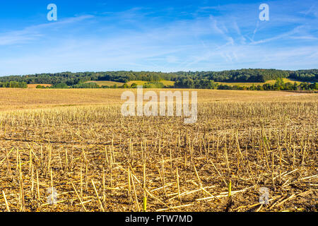 Farmland after sunflower harvest with stalks remaining - France. - Stock Image