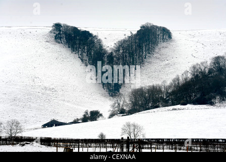 Winter view of V plantation on the South Downs at  Streat, East Sussex - Stock Image