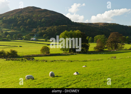 A sheep farm in cumbria set in a a wide valley surrounded by hills on a bright sunny autumn day - Stock Image