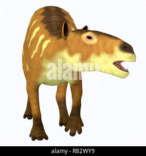 Eurohippus Horse Front Profile - Eurohippus was an early horse that lived in the Middle Eocene Period of Europe and Asia. - Stock Image