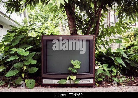 Old television by plants on field - Stock Image