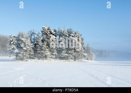 Frosty trees in fog - Stock Image