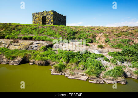 Green algae in a pool on the Farne Islands, Northumberland, UK. - Stock Image