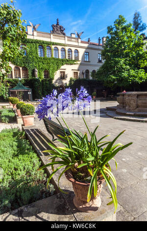 Castolovice Castle, Courtyard, Agapanthus in pot Czech Republic, Europe - Stock Image