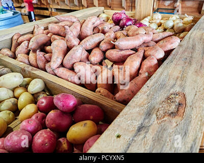 On display for sale in a roadside farm or farmer's market are yukon gold potatoes, sweet potatoes, red potatoes, red onions and white onions in USA. - Stock Image