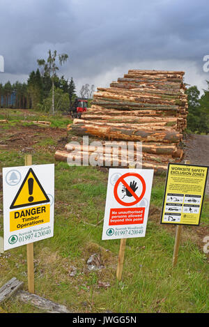 Recently felled timber ready stacked and awaiting collection to be taken for processing. - Stock Image